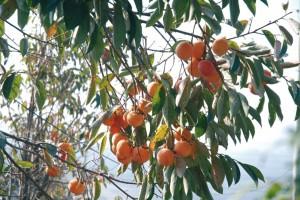 2015-mayo-programas-politicos-Frutas-naranjas