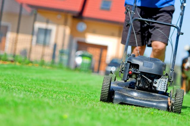 El intrusismo en jardinería ocasiona pérdidas de 35 millones de euros en las empresas legales