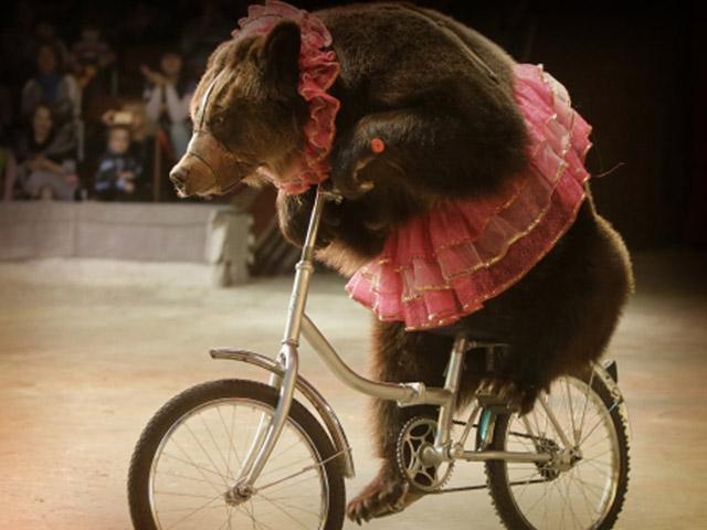 Valencia erradica los espectáculos con animales salvajes