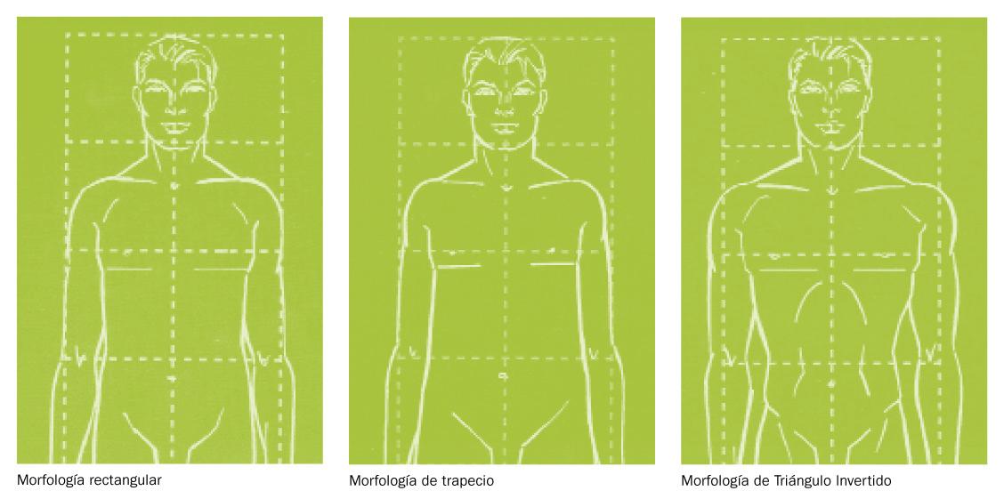 El estudio morfológico del cuerpo humano como fundamento de la ...
