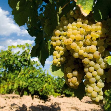cítricos-vino-Mercosur