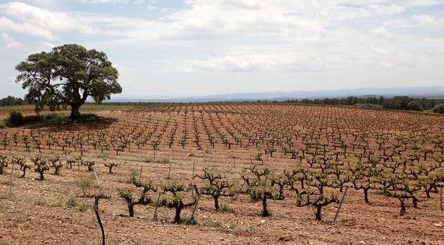 Convocadas las ayudas al sector vitivinícola para la promoción en mercados de terceros países