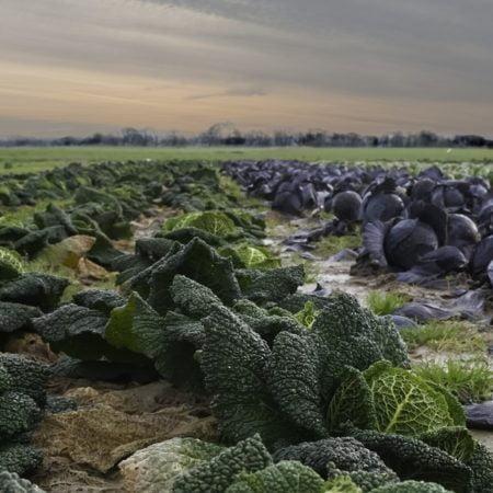 guia-emprendedores-agricolas