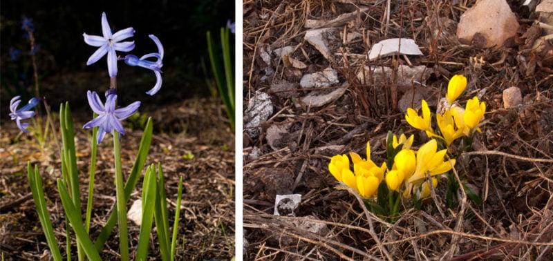 nuevas-plantas-florales