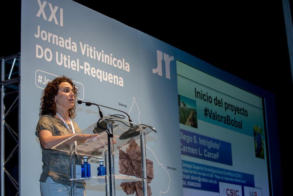 El CSIC investiga en #ValoraBobal la variedad estrella de la DO Utiel-Requena