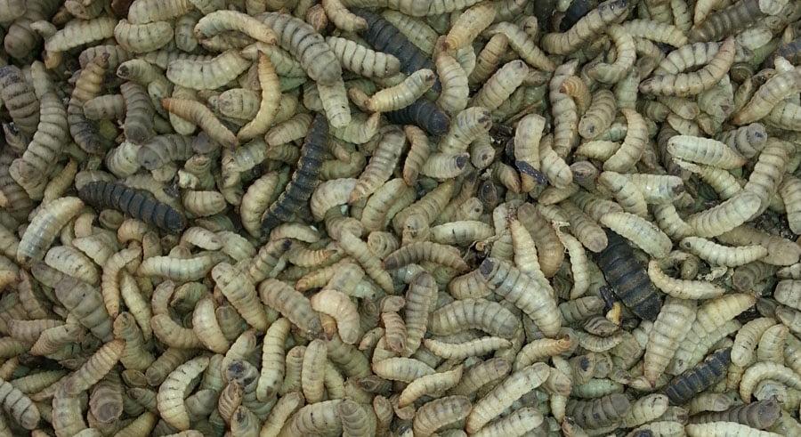 Moira Capital inyectará 16 millones en la alicantina BioFlyTech en dos años