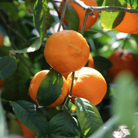Frutas-Romu-Atitlan