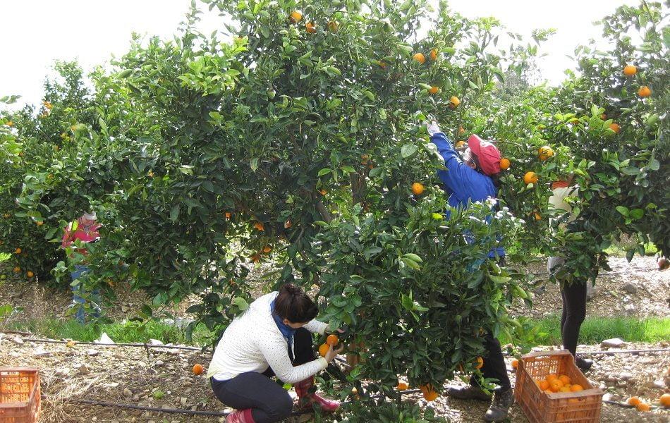 Imagen destacada Más de 15.000 agricultores alicantinos tienen un salario inferior al SMI