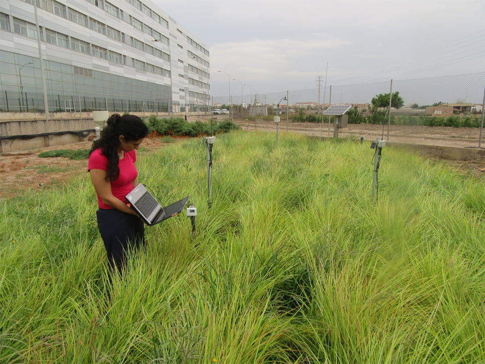 Premio internacional a una investigación de la UPV sobre el riego de la chufa