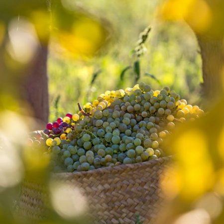 ipg-vins-castellon