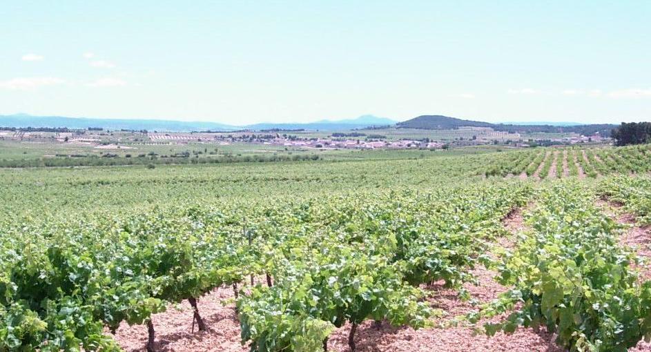 Imagen destacada Los agricultores de la uva del Vinalopó se rebelan contra la subida de las primas