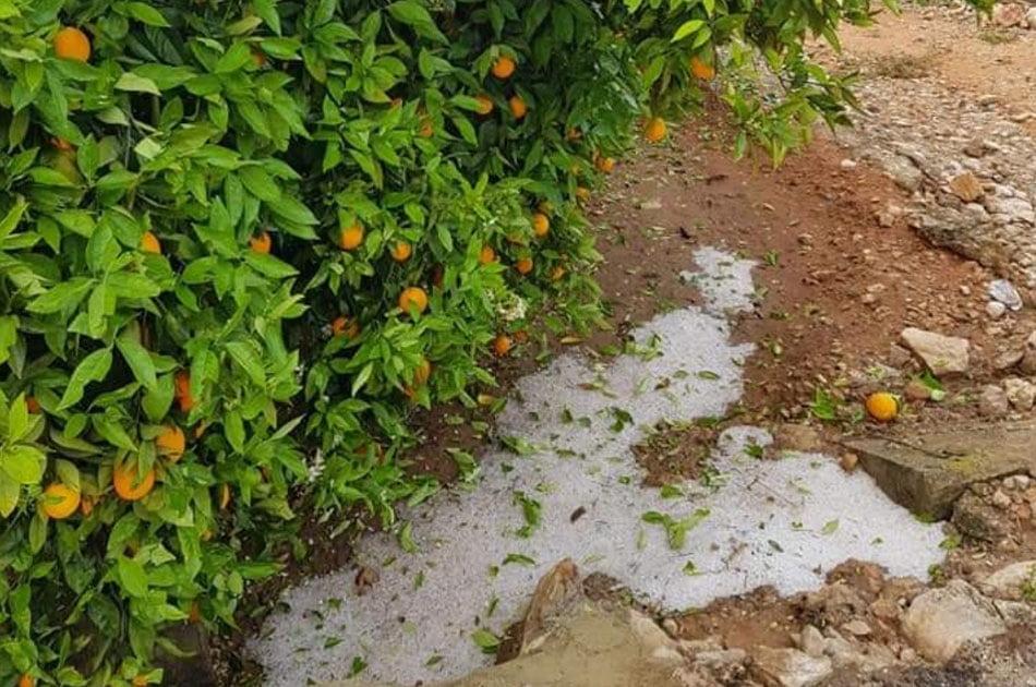 Imagen destacada AVA-Asaja denuncia que el Consell recorta un 20% la subvención de seguros agrarios