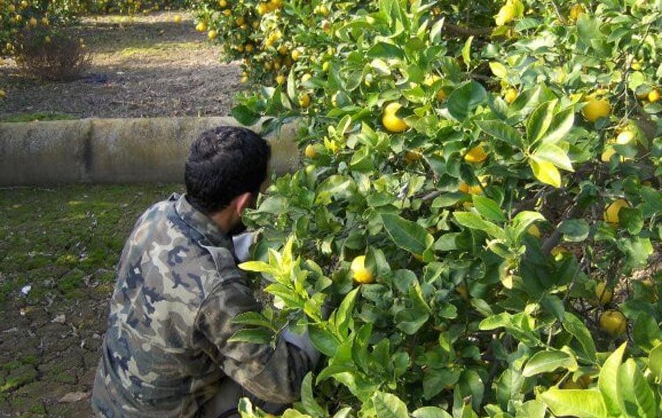Imagen destacada La patronal alerta de los perjuicios de aplicar el SMI a los agricultores alicantinos