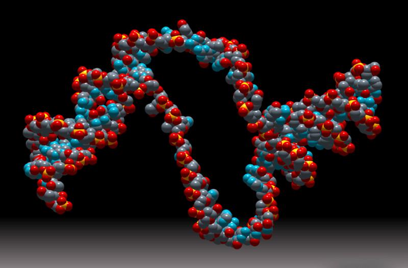 Nace Genotipia, la comunidad de profesionales de la genética médica