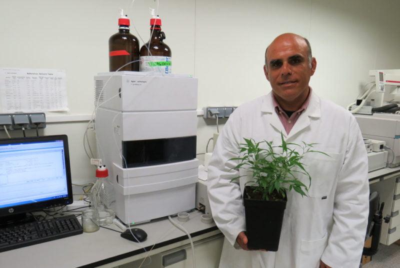 Hemp Trading obtiene una variedad de cannabis con alto potencial medicinal