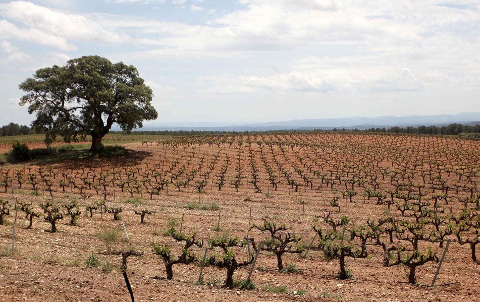 Imagen destacada Agricultura pide a Agroseguro que agilice la peritación del granizo caído en Requena