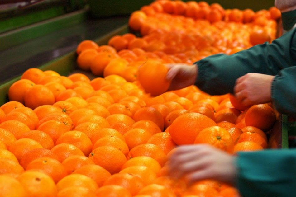 La agroalimentación representa el 20,2% del total de las exportaciones de la Comunitat