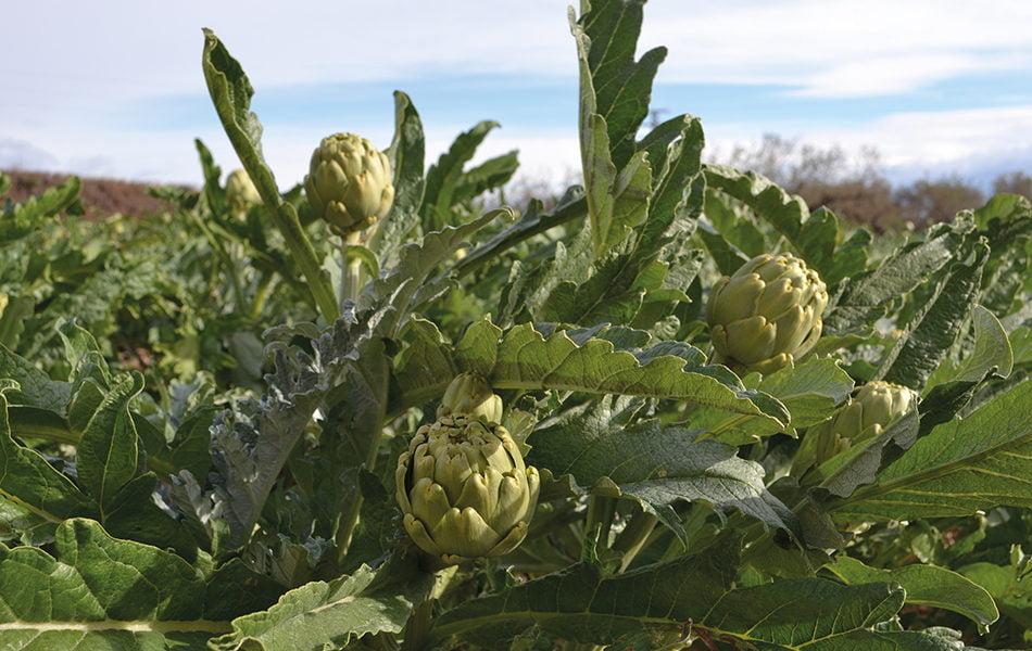 Imagen destacada Agricultura aprueba ayudas de 40,3 millones a productores de frutas y hortalizas