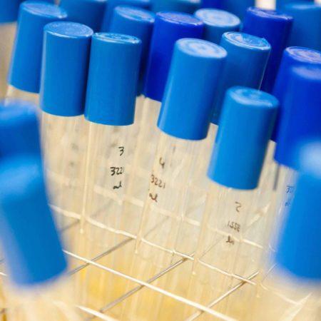 laboratorio-tubos-ensayo-investigacion-quimica
