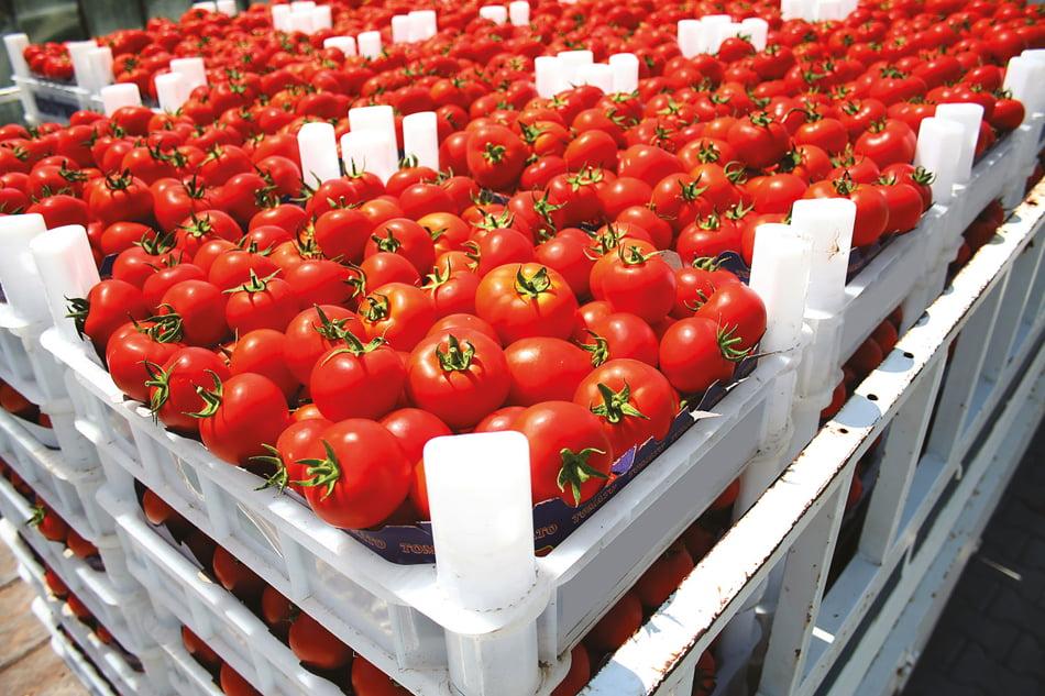 Imagen destacada La OCDE anima al sector agroalimentario a prepararse para la sostenibilidad