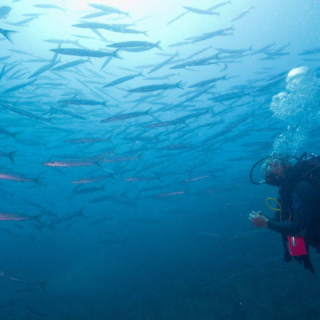 scuba-elx-buceo-reserva-marina-bucear