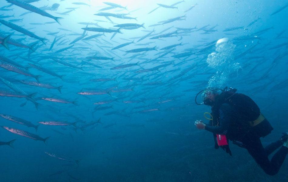 Imagen destacada Turismo subacuático: ¿qué se necesita para bucear en reservas marinas?