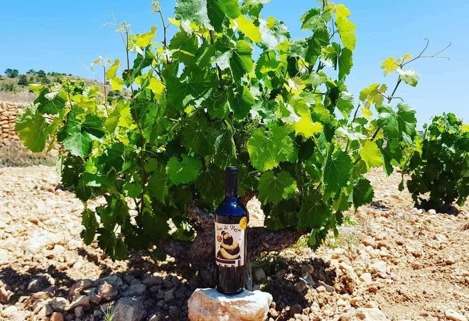 Imagen destacada Luna de Reina, un vino para combatir la despoblación en la España vaciada