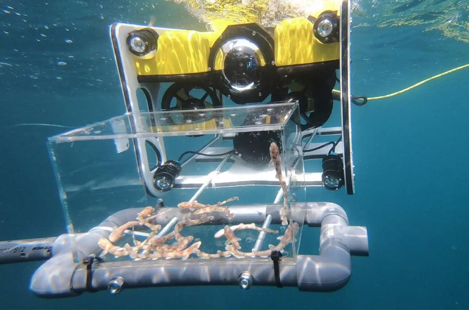 Imagen destacada El Oceanogràfic utiliza un dron submarino para liberar crías de tiburón
