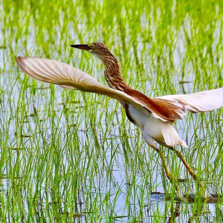 destino-turístico-ornitológico