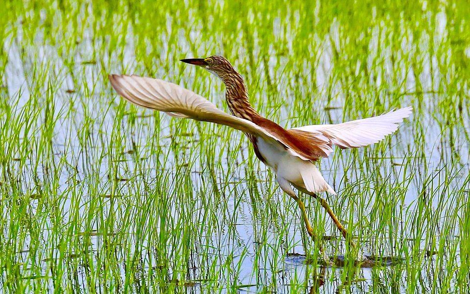 Imagen destacada Turisme CV promociona la Comunitat como destino turístico ornitológico en Reino Unido