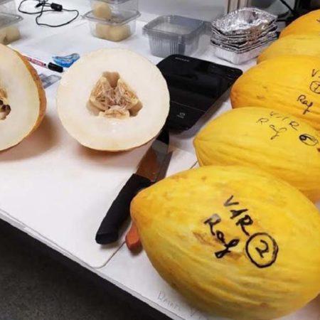 melon-oro