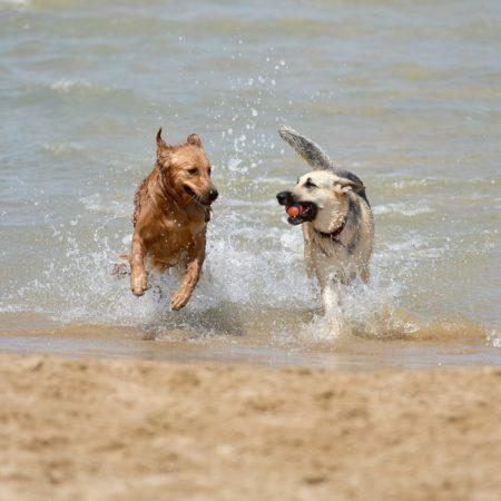 alicante-playa-perros