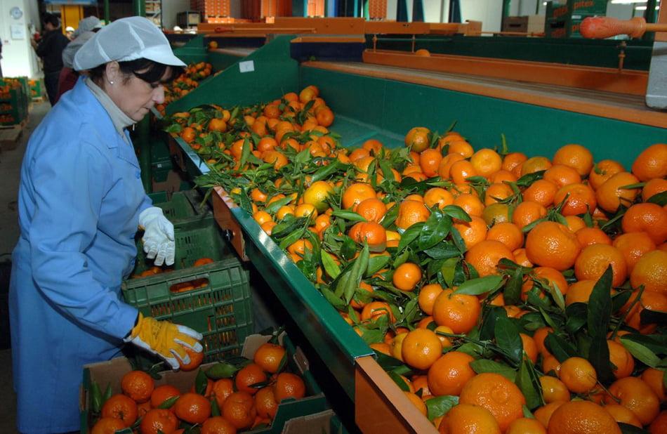 Imagen destacada Crecen las empresas agroalimentarias con sello Aenor ante la covid-19