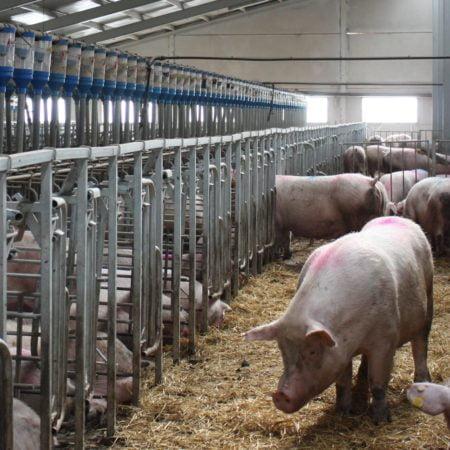 castellón-perdio-67granjas-pese-al-buen-momento-del porcino