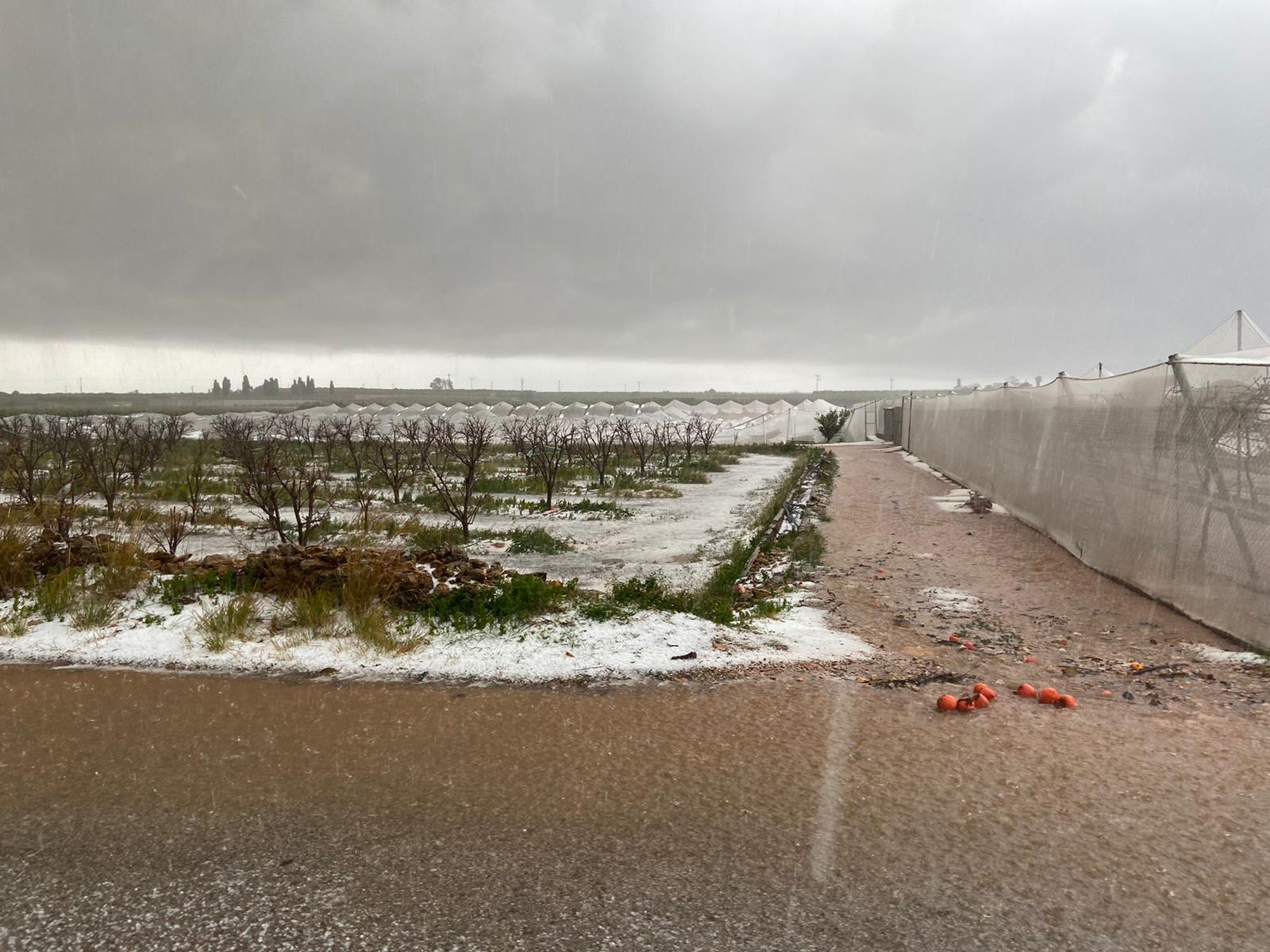 Imagen destacada Agricultura pide al Gobierno rebajas fiscales para los cultivos afectados por temporales