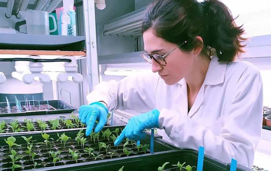 Imagen destacada Crean una nueva variedad de berenjena resistente a sequías, hongos y gusanos