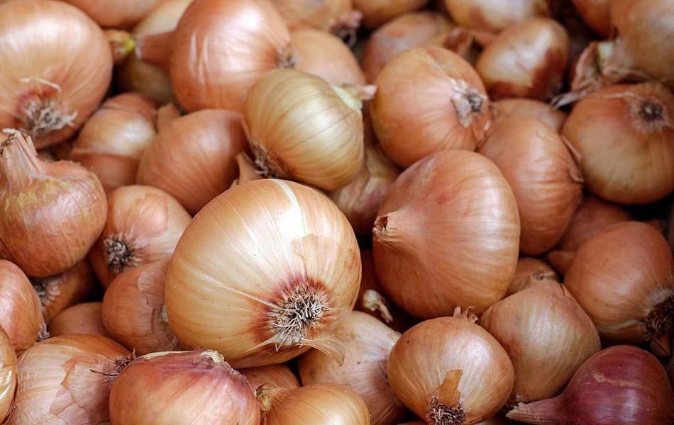 AVA-Asaja y La Unió protestarán el 26 de junio por la campaña de patatas y cebollas