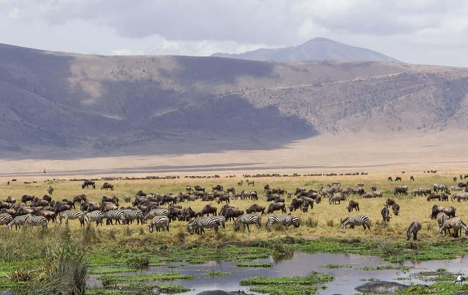 Imagen destacada Ngorongoro, cuando el paisaje es majestuoso