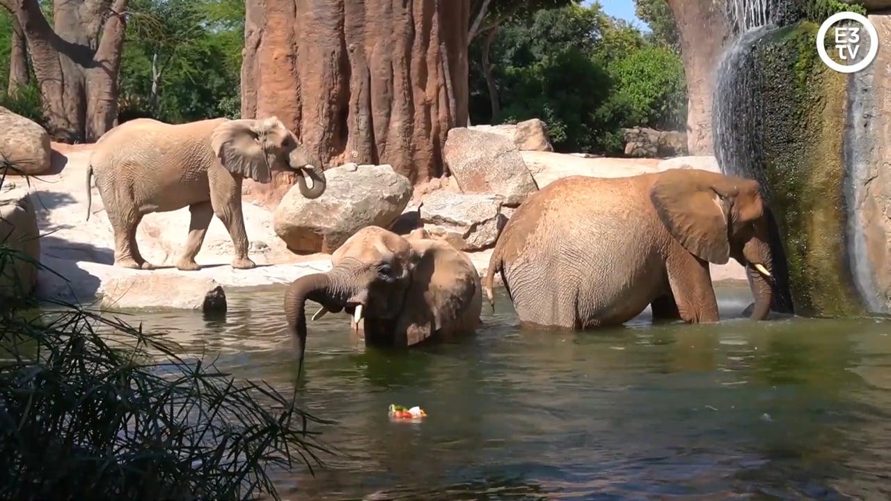 """Helados """"animales"""" de bienvenida a julio en Bioparc"""