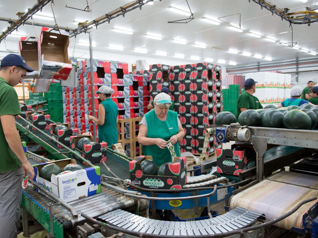 La Cooperativa Agrícola Benihort incrementó su volumen de negocio un 5,75% en 2019