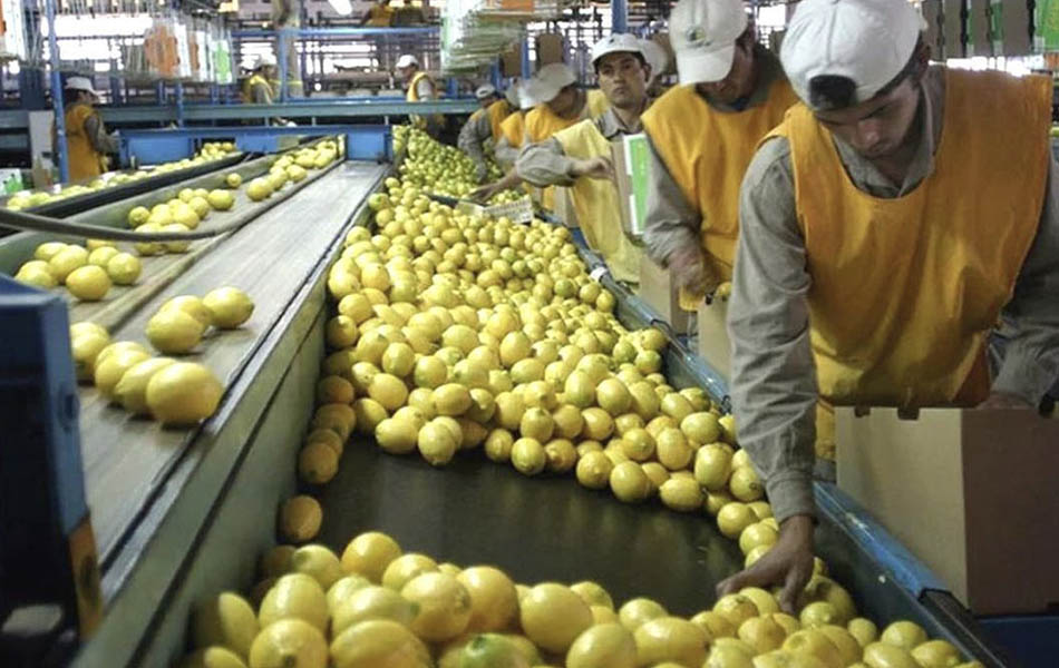 La Unión Europea intercepta 39 envíos con limones de Argentina infestados con plagas