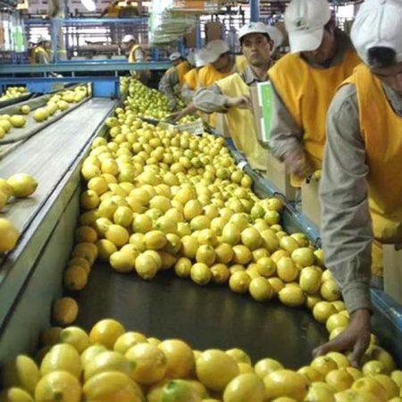 limones-argentina