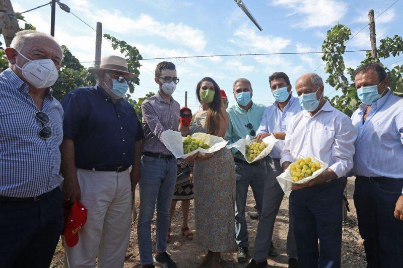La conselleria de Agricultura y representantes de la DOP Uva de Mesa Embolsada del Vinalopó, en el corte tradicional de racimos al arrancar la cosecha. /DPA