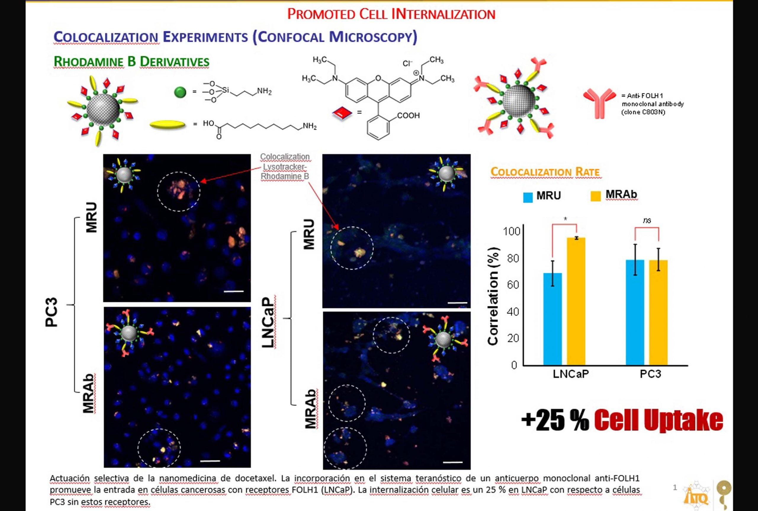 UPV y CSIC desarrollan una nanomedicina más eficiente para cáncer de próstata
