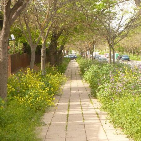 gestión fitosanitaria