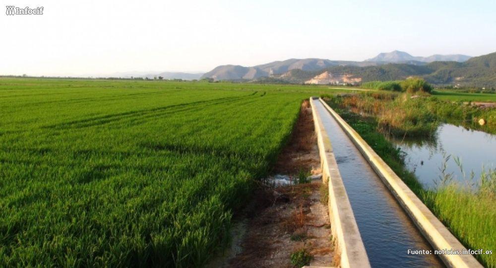 El arroz de la Albufera, clave del éxito de Paellas Gastraval