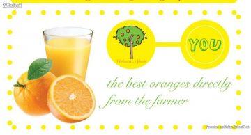 Innova y exporta con Naranjas del Carmen