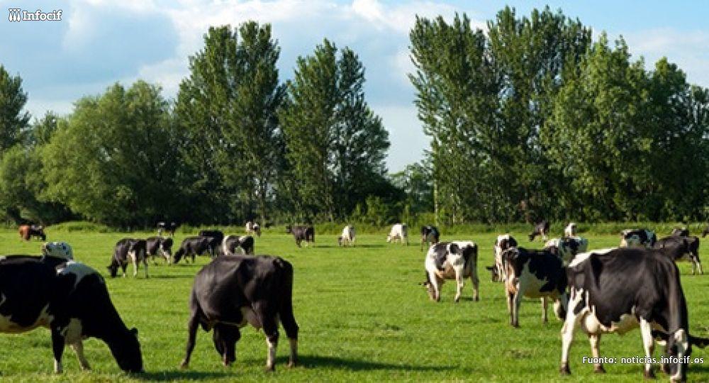 Unas 120 ganaderías en Cataluña Imagen: chil