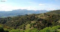 Licitación de actuaciones forestales en Andalucía