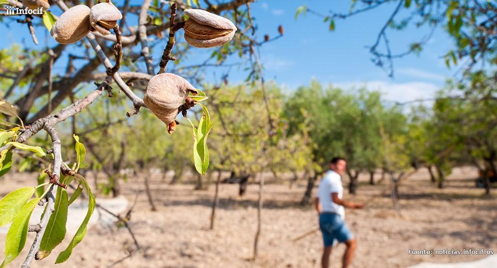 Sicilia, su agricultura y las multinacionales